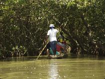 Mangrovenwald La Boquilla - Kolumbien