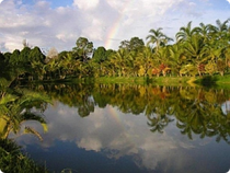 Landschaft Amazonas Leticia