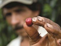 Kaffeeprozess - Kaffee Verarbeitung - Koloniales Zentrum - Altstadt - Valle de Cauca - Kolumbien
