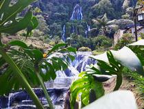 Bonita Farm - Pereira - Kolumbien