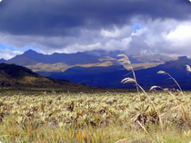 Purace Nationalpark - Paramo - Kolumbien