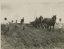 Harvesting at Frankley 1940. Grateful thanks to Local History Digital Archive of the History Department of King Edward VI Grammar School, Five Ways, Bartley Green - see Acknowledgements for a direct link to that website.