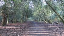 Sutton Park near Four Oaks Gate