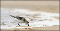 Plage du Grand Crohot, presqu'île du Cap-Ferret (33) ©JlS