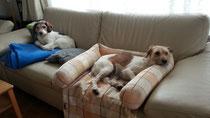 Askia und ihre Mama Wurzel geniessen derweil die Ruhe auf dem Sofa...
