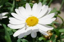 und weil die sonnigen und blumigen Momente derzeit so kurz sind, hier noch ein paar Blumengrüsse vom Chirsgarten...