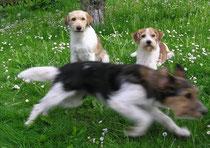 schnell weg, meint Amy-Lou, kommt, wir rennen noch 'ne Runde! ;-)