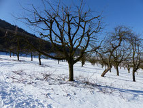 """der Chirsgarten, unsere """"Spielwiese"""""""