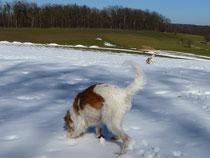 noch viel Schnee... herrlich...