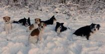 sieben Hunde - alle speziell