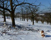 lieber rennen und schauen, was man so findet unter den Kirschbäumen...