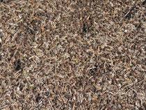genau. ein Haufen Ameisen als Sinnbild für die Gruppenphotos... ähnliches Gewusel! ;-)