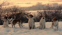 so startet das neue Jahr prima! Kromispaziergang - Askia, Debby, Tuba, Wurzel und Flocke