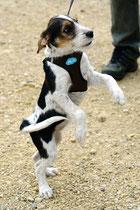 ein Kromitänzchen in Ehren, Bailey aus dem Hummelgarten verschafft sich Uebersicht
