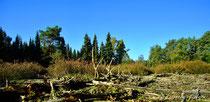 Heidelandschaft Oktober 2015