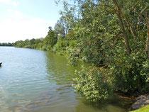 Das naturbelassene Nordufer