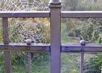 Perlenfäden - Netzkunst im Novembernebel (Christiane Ziller)