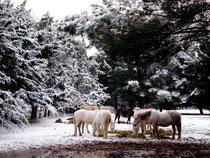 Schnee im Mas Blanc