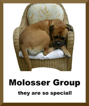 molosser ID