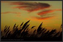 Wehendes Strandgras bei Sonnenuntergang.