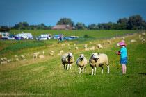 Meine Tochter und die Schafe