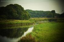Natur PUR in Dornum