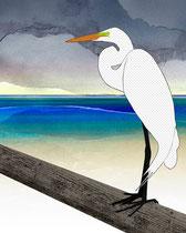 Great American Egret