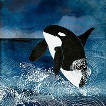 Killer Whale Orca