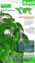 Basil benefits infographic