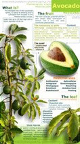 Avocado benefits infographic