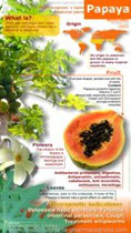 Papaya benefits infographic