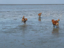 2012 - im Wattenmeer unterwegs
