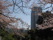 東京ミッドタウンと新国立美術館