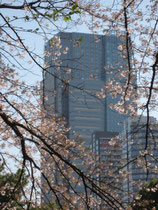西麻布側の桜並木から眺めるミッドタウン