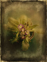 vintage style photo, textured and handpainted winter plant with flower
