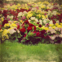 vintage style photo, textured and handpainted, vintage pretty flowers, retro style photo