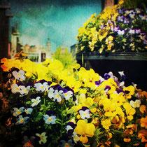 vintage style photo, behind the flowers, retro style Zaragoza city photo