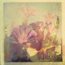 vintage style photo, wild summer flowers, retro style