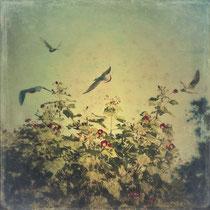 vintage style photo, freedom, retro style trees and birds photo