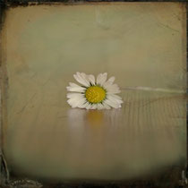 vintage style photo, textured and handpainted, simplicity, vintage chamomile flower photograph