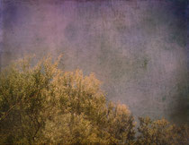 """""""The music of the trees"""" Artistic color photograph"""