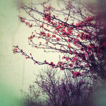 vintage style photo, handpainted and textured, cherry blossom