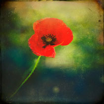 """vintage style photo, """"I found a poppy"""", textured and hand painted poppy photograph"""