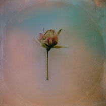 """textured photo, """"Once Upon a Time a dancer Rose"""", textured and hand painted rose photograph"""