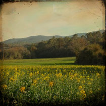 vintage style photo, handpainted landscape of Catalunya