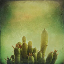 vintage style photo, textured cactus image, Cactus on my Mind, retro photo style, nature