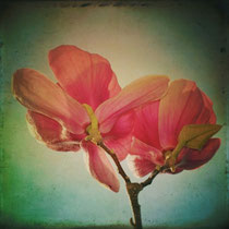 vintage style photo, textured and handpainted, vintage spring flowers, retro photo style