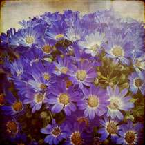 vintage style photo, with textures and emulsions, my boheme flowers, retro style photo