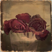 """vintage style photo, red roses vintage photography, """"The Veins of Roses"""""""