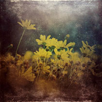 vintage style photo, handpainted and textured, abstract yellow daisies